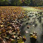 leavespark1_200
